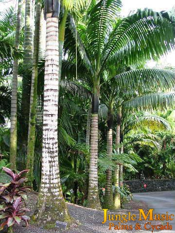 Tropical landscape tropical landscaping with emphasis on for Garden design with palms
